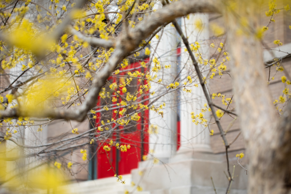 Yellow foliage in front of the red doors at school of education