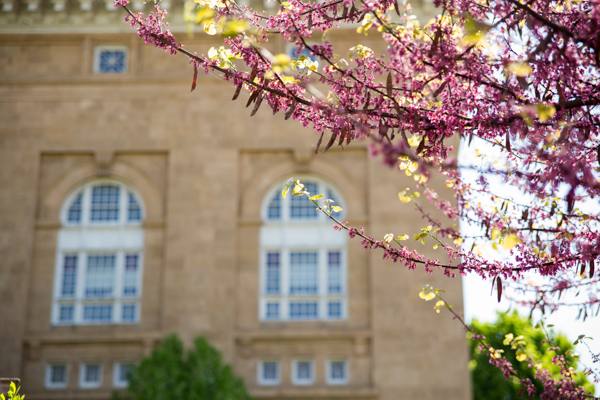 Pink blossoms across a tan brick facade outside Lathrop Hall